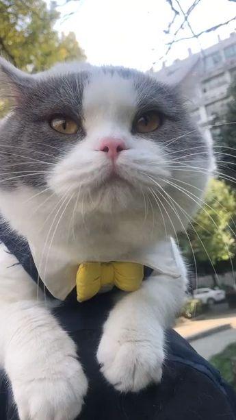 #Amazing Cat Voice - #Amazing #Cat #memes #Voice