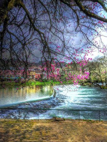 Há algumas certezas na primeira quinzena de todos os Marços em  Arcos de : o Arcos TT o prenúncio da Primavera e o florir das magnólias junto ao rio Vez