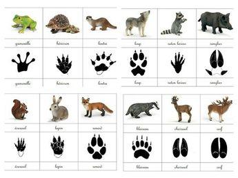 Empreintes animaux de la forêt - Les p'tits loups