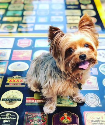 #dog #hund TBT - last years charity flip 4 a cause tournament #dogsof #yorkiesof #yorkie #yorkshireterrier #dog #yorkshireterrierz #bestyorkies #yorkielove #yorkielovers #dogsofinstaworld #dogsofinsta #dogmodel #mydogiscutest # #nylatheyork #yorkiegram #yorkielife #yorkieoftheday #yorkielover #yorkiefamous #dog_features #yorkiesofa #Yorkieswag #yorkiesrule #yorkieterrier #yorkiesofinsta #sendadogphoto #featuredogsdaily #dogpersonalities