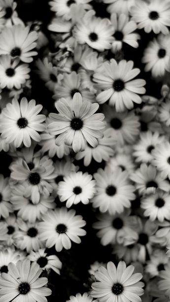 1440x2560 Preview wallpaper black white, flowers, grey, daisies 1440x2560