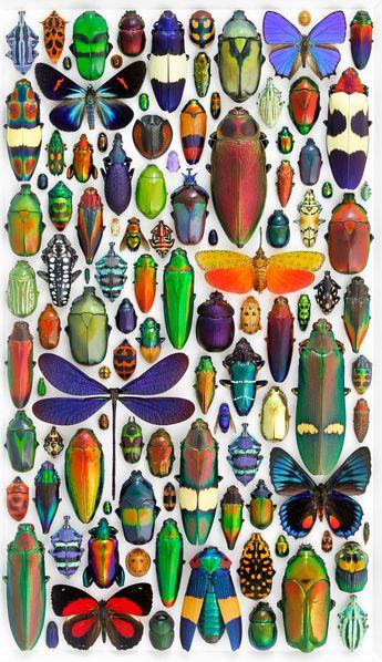 Biophilia – Les délicates mosaïques d'insectes de Christopher Marley