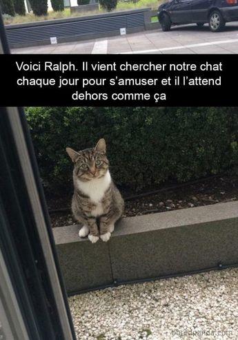 23 photos légendées de chats qui vous feront passer du rire aux larmes (page 3) #memes #jokes #sillyjokes