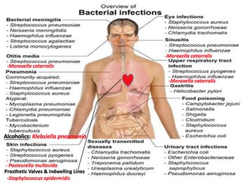 Introduction to Medically Important Bacteria