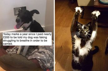 22 Animals Who Are So Freaking Extra, They're An Inspiration To Us All