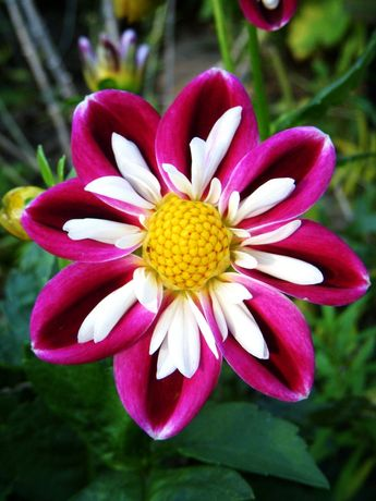 42+ Lovely and Unique Flower You Should Have In Your Garden