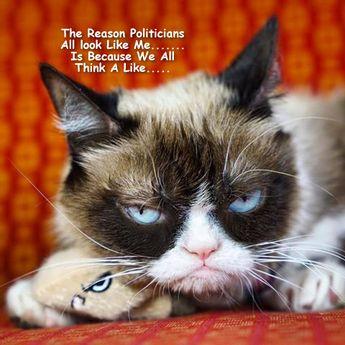 Grumpy Cat MeMe's By Gary 2017
