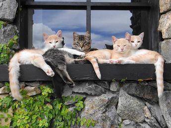 """""""chardinière"""" : groupe de chats installé pour décorer le rebord de la fenêtre - bien plus original que la bête jardinière et ses fleurs, non ?..."""