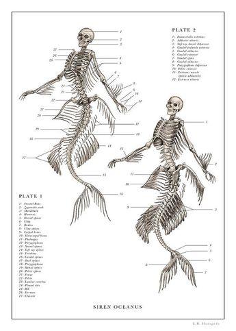 Mermaid Print 1, 2... Art Print by EB Hudspeth
