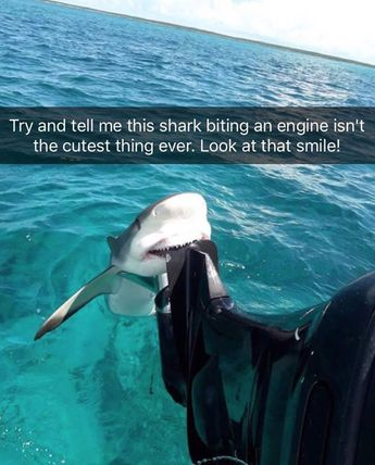 30 Cute Pictures Of Animals With Captions To Make Your Day Better