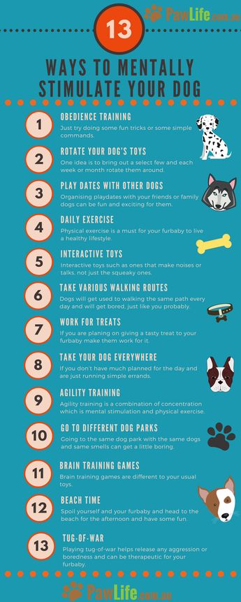 13 Ways to Mentally Stimulate your Dog