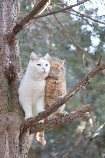 My Cat Princess Tigerbelle — Прекрасные 😍