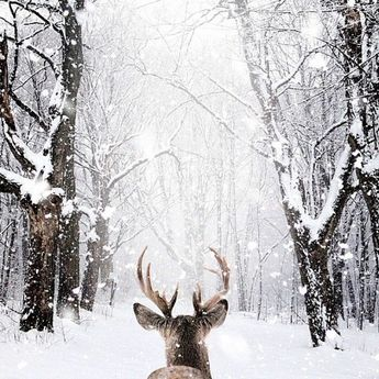 Le paysage d'hiver en 80 images magnifiques! - Archzine.fr