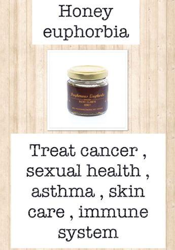 "Health benefits of Euphorbia mellifera ""Honey Spurge"""