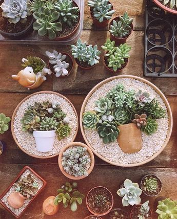 Best 12 Obsessed with this new succulent trend #succiepotinapot – #Obsessed #succiepotinapot #Succulent #trend – SkillOfKing.Com