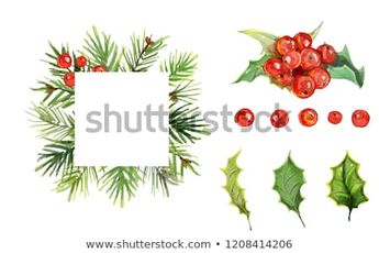 Christmas ornaments from the branches painted with watercolors on white background. Holly sprigs with red berries. Remove background
