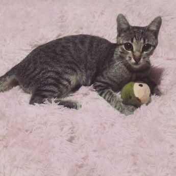 Um #tbt de quando eu, Berenice, era apenas uma bebezinha. . . . . . #gatinices #berenice #tbt #throwback #thursday #gatos #gatunas #gatineos #felinos #bichanos #gateiros #gatotigrado #vidadegato #listradas #paidepet #gatosdobrasil #gatosdoinstagram #listras #miau #animais #instagatos #cats #catpic #catlover #lovecats #instacat #babycat #catsofinstagram