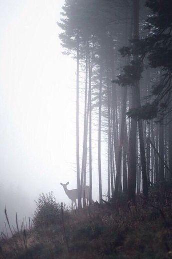 A deer in a foggy forest. #Deer #Animals #Nature #NaturePhotography #Mist #Fog #Forest #Landscape #LandscapePhotography