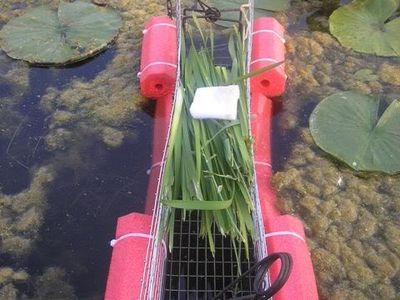 77 Best frog trap images in 2019   Pond life, Science for ...