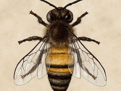 Bees/bugs