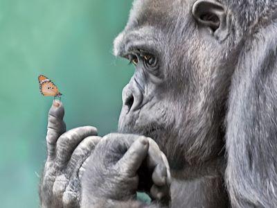 ~Animals!!~