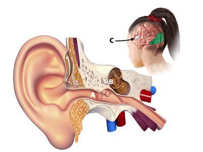 acupunctura în tratamentul varicozei)