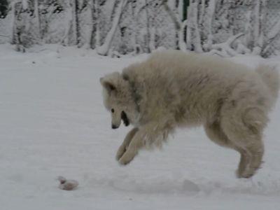 Pierderea în greutate a lupului dennis pierderea în greutate din cauza îngrijorării