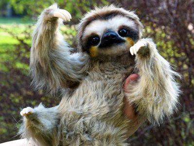 Mr.Roadman Mens Funny Sloth Good Morning DIY Custom Print Casual O-Neck Sweater Jumpers Pullover