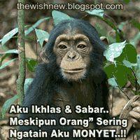 Kata Lucu Gambar Monyet Cikimm Com