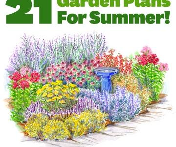 Yard & Plant Ideas