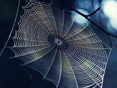 Webs~~