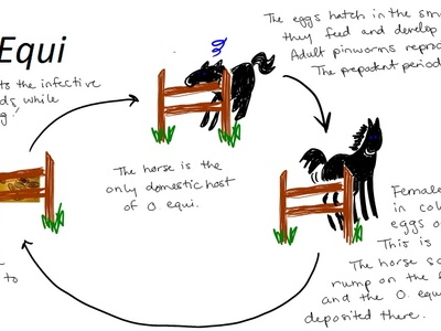 Ciclo de vida de oxyuris equi, Definește saprofite și paraziți. Meniu de navigare