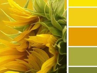 ༺ Color Combinations ༻