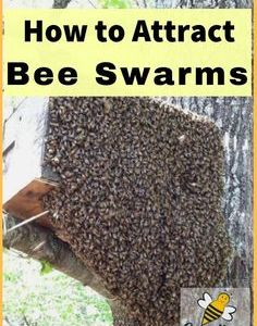 ✅ 1 EA Honey Bee Swarm Lure Bait for Trap or Hive Beekeeping Free Honey Bees