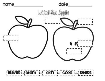 photo about Parts of an Apple Printable identified as neptune beckford (neptunebeckford) upon Pinterest