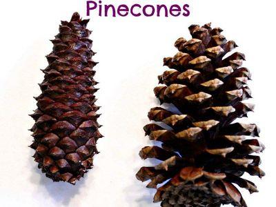 Pinecone Art