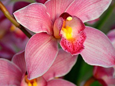 ***Orchids***