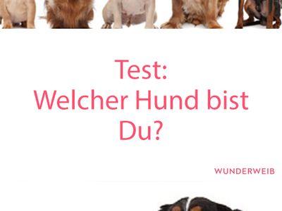 Chuckit Sport 14 Wurfger/ät Hundespielzeug Farbe zufallsbedingt