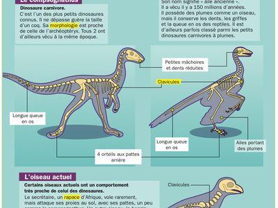 dinosaury a vyhynuté zvieratá