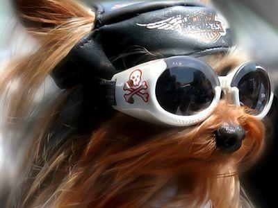 Opticien Canin (opticiencanin) on Pinterest 29bd3e1bdcd0
