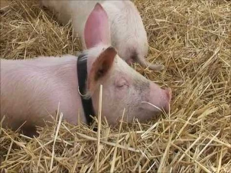 Fun Farm Animal Facts for Children - A few fun facts about cows, pigs, horses and other farm animals.