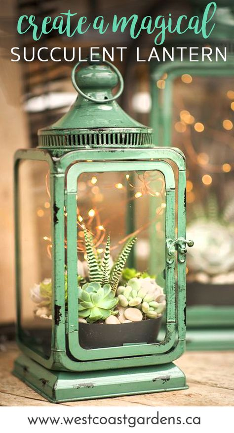 Magic Succulent Lantern House + Home Tips West Coast Gardens is part of Planting succulents - There's magic in the air on summer evenings, and these succulent lanterns add the perfect mood This DIY video shows you how to create the look Cacti And Succulents, Planting Succulents, Planting Flowers, Succulent Terrarium Diy, Terrarium Centerpiece, Indoor Succulent Garden, Succulent Table Decor, Potted Plant Centerpieces, Mason Jar Succulents