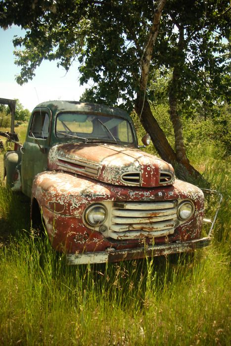 Faded grandeur in a pick up, it looks like it's enjoying it's retirement under the cooling shade of the tree.