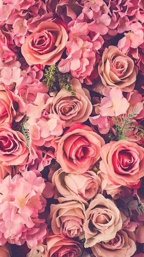 fondos de rosas blancas tumblr