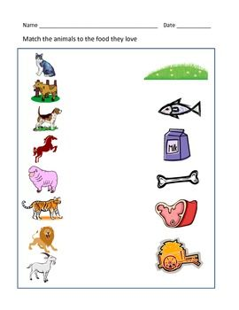 Animals And Their Food Worksheet Food Animals Animal Facts