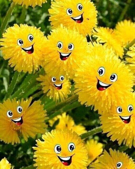 Любить необходимо возраст свой! Прекрасен мир весеннею порой, Когда природа наша оживает... И одуванчик ,солнечный такой, Собою нашу землю озаряет!!! Идут дожди и мчатся грозы, Витают ароматы чайной розы. И соловей выводит звонко трель, Поет своей любимой -ты поверь!!! Весна идет как маленькая жизнь, Покрепче за нее, мой друг-держись. И одуванчик , бывший золотым , Состарился и тоже стал седым!!! Воздушным, нежным стал ,пушистым, И облик его стал волшебно- чистым! Душ...