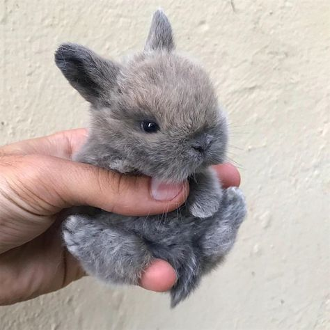 How To Train Your Bunny!