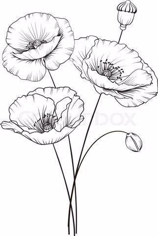 Mohnblume Kunst Grun In 2020 Poppy Flower Drawing Flower Line Drawings Flower Sketches