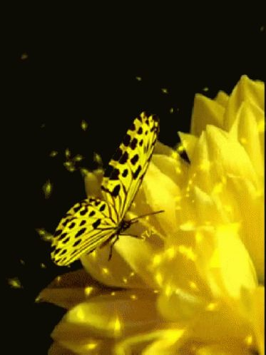 Yellow Butterfly GIF - Yellow Butterfly Flowers - Discover & Share GIFs