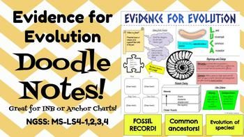 Evolution Evidence For Evolution Doodle Notes Inb Or Anchor Chart Ngss Or Anchor Chart Anchor Charts Doodle Notes